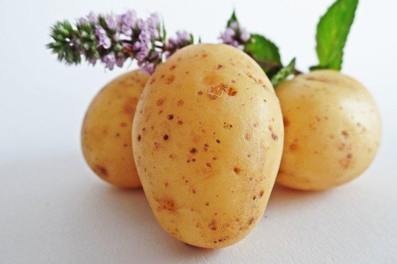 馬鈴薯發芽後會產生大量有毒生物鹼,千萬不要吃!(圖/HolgersFotografie@pixabay)