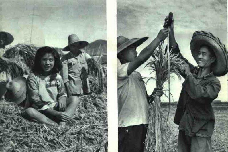中國當時對外高喊糧食產量創世界紀錄,國內饑荒餓死千萬人口。(取自網路)