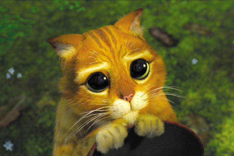 道歉,並不是只要裝可愛就好(圖/Shrek@facebook)