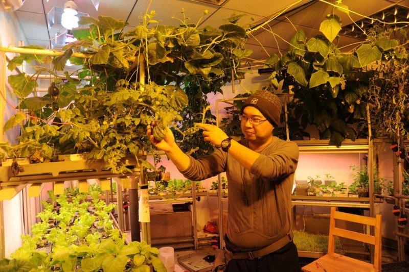 2月18日,王征在中山站蔬菜溫室實驗室展示無土栽培出的小西瓜。(新華社)