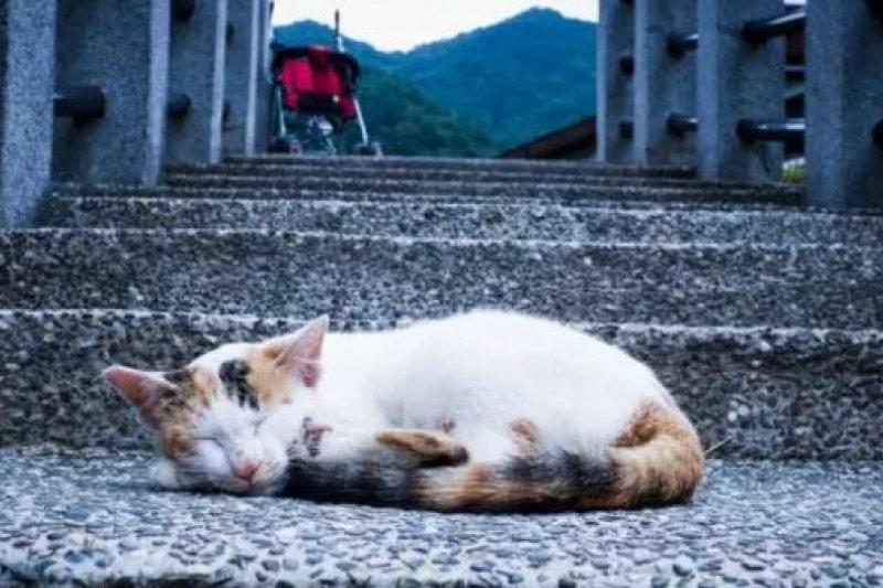 在台灣,有一種貓的聖地,叫猴硐。(取自微信號直通台灣)