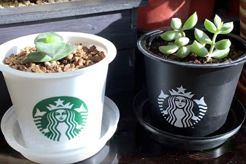 韓國網友發揮巧思,把星巴克地區限定的布丁杯變成時尚可愛的多肉小花盆。(圖/프랑스치즈 Frances@Youtube)