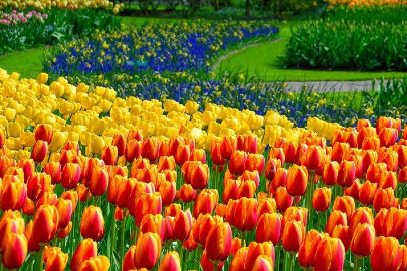 雖然現在的天氣陰晴不定,但是如果你要出國,可以參考這些地方賞花!(圖/Pinkoi)