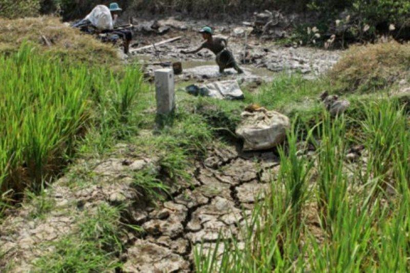 越南南部湄公河三角洲地區遭受90年來最嚴重乾旱。(BBC中文網)