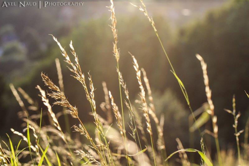 有效又天然的煥膚方式,就能帶來柔軟、容光煥發的肌膚。(圖/Axel Naud@flickr)