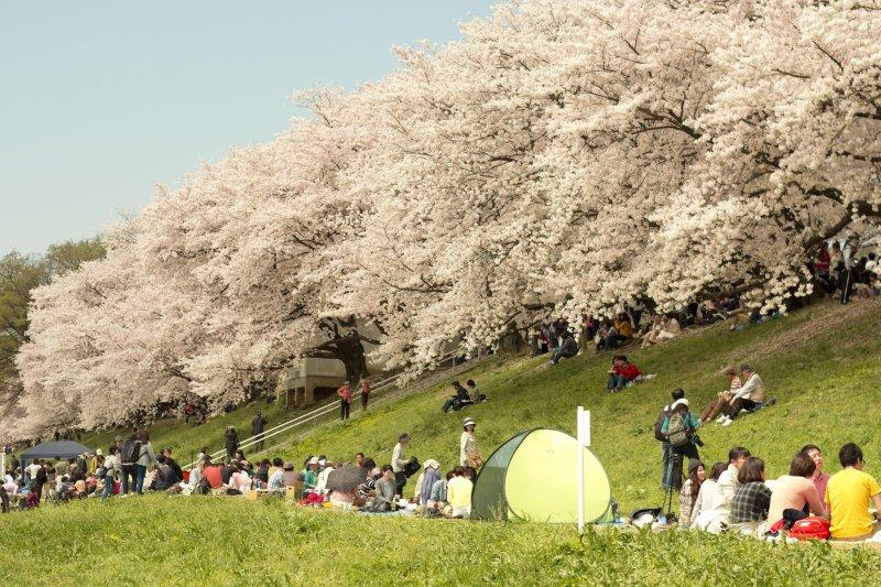 日本工作假日多,但國定假日到處人山人海。(圖/Japanexperterna.se@flickr)