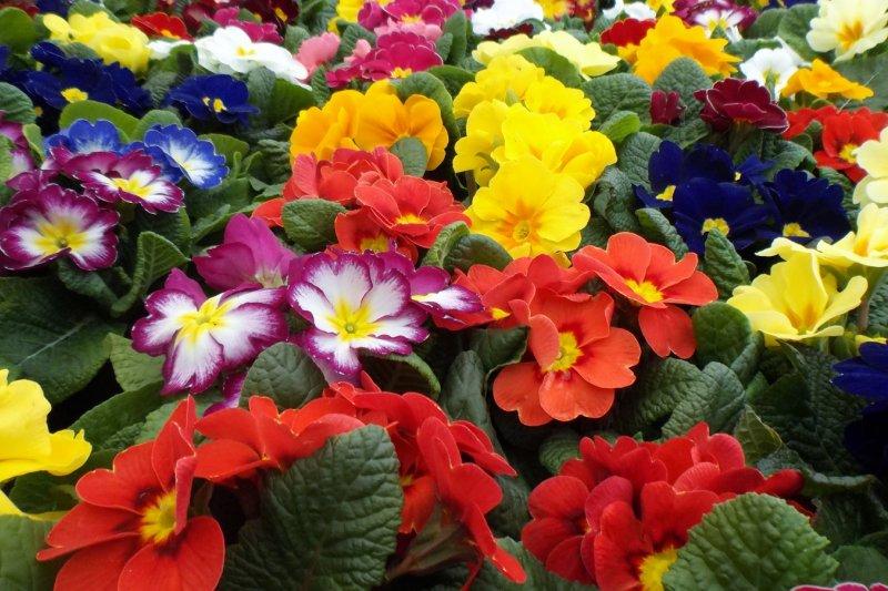 透過繽紛豐富的花樣設計,春夏的藝術淋漓地展現於舉手投足間。(圖/oatsy40@flickr)