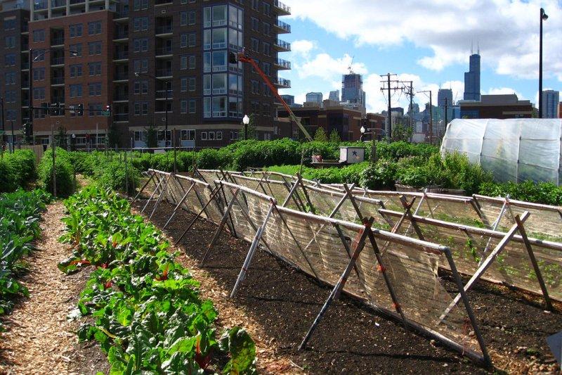喝什麼補 腎虛 | 一位醫生的現場觀察:在城市辟一小塊菜園,自己種出健康!