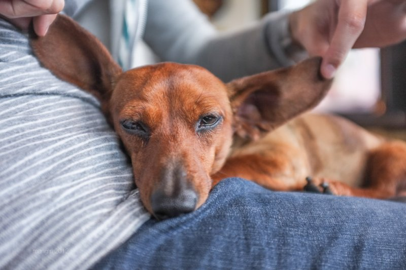 寵物對於病人的治療有重大幫助,除了心理上的支持,生理上也有所助益。(圖/manginwu@Flickr)