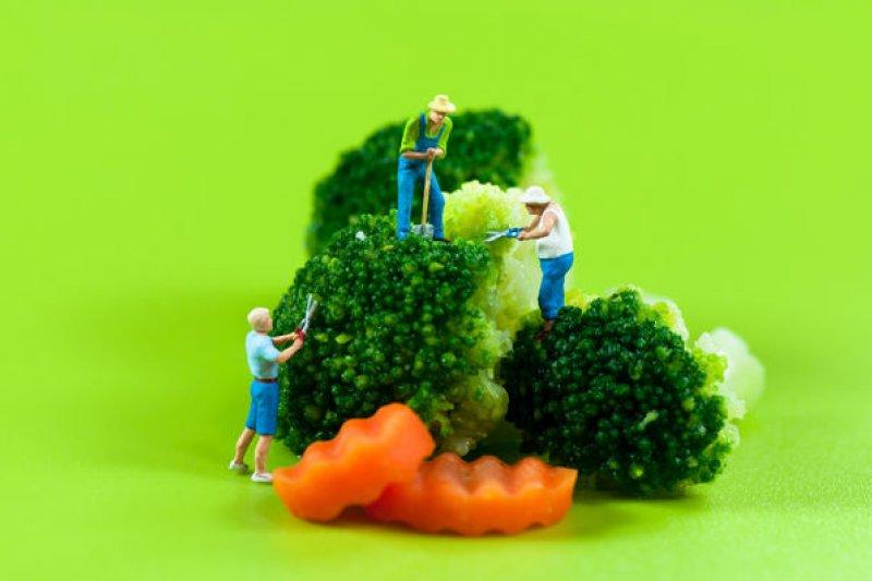 花椰菜用初榨橄欖油和葵花油炒的話,維生素C保存和生的一樣。