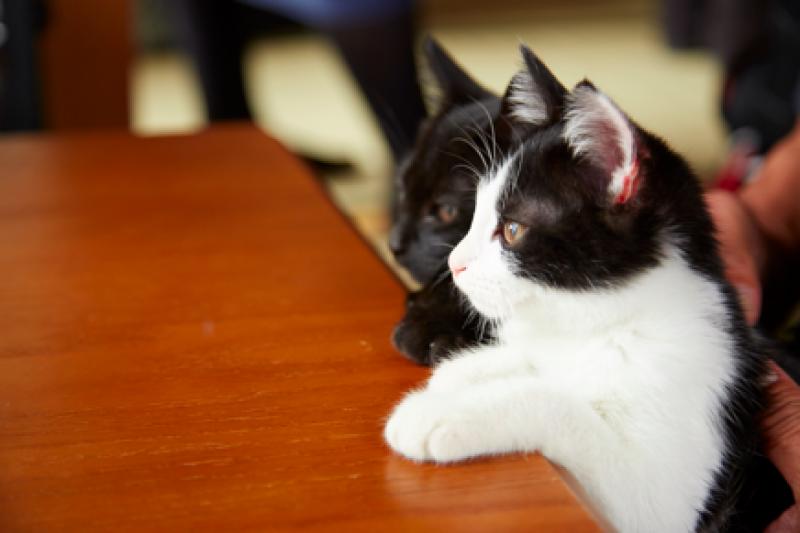 感動日本上萬人的溫馨漫畫《為什麼貓都叫不來》,這回化身電影來融化你的心!(圖/擷自youtube)