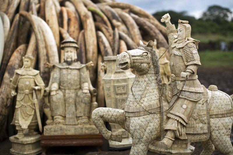 肯亞今年4月底焚毀多達105噸的象牙,向全世界宣示反盜獵(美聯社)