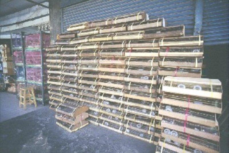 放生鳥可以預定,用規格化包裝,送到各地鳥店屯積。(台灣動物社會研究會提供)