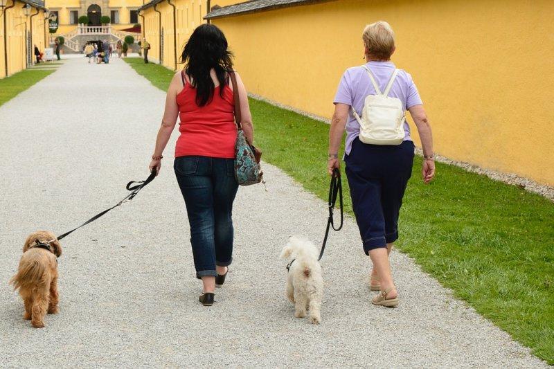 有寵物的人相較下心臟較健康,尤其是養狗的人。(圖/Antranias@pixabay)