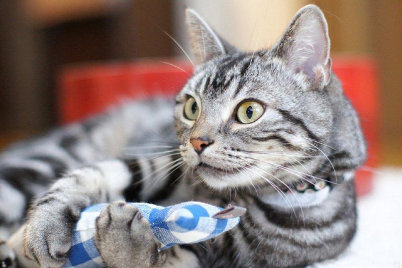 貓咪真的喜歡吃零食嗎?(圖/K-nekoTR@flickr)