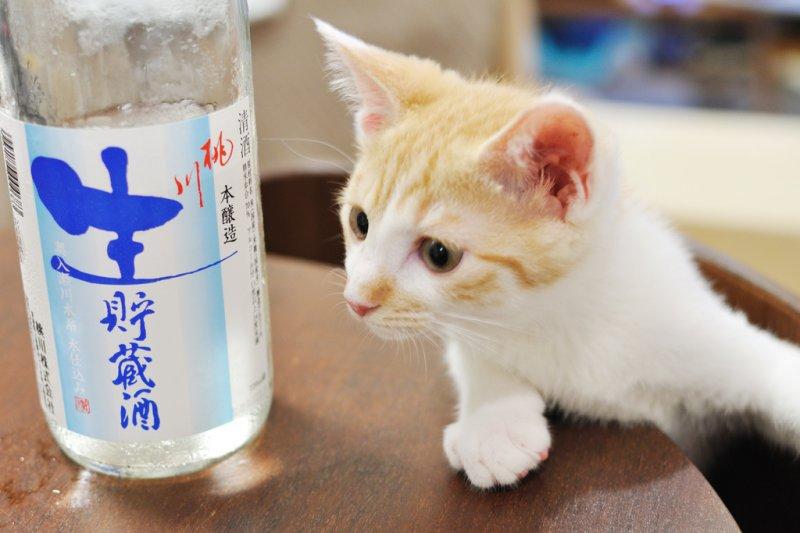 日本酒到底有哪些名詞?(圖/yoppy@flickr)