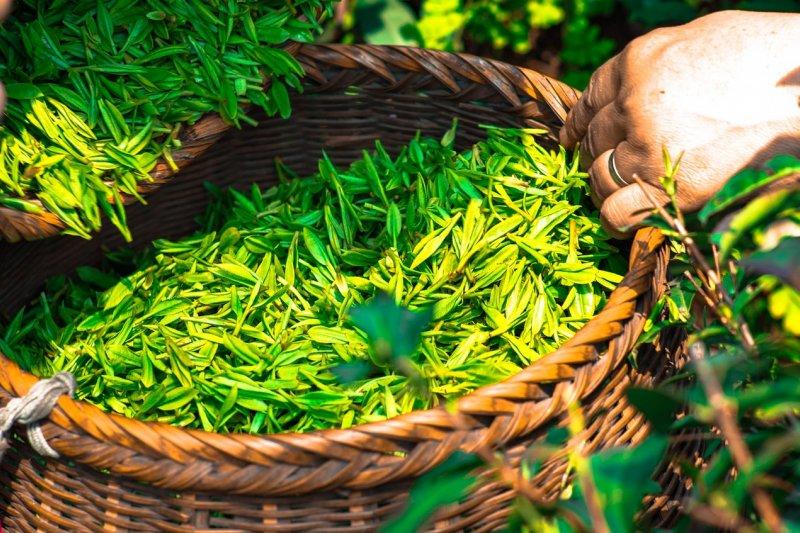 中國是茶的故鄉,漢族人飲茶,據說始於神農時代,少說有4000多年歷史!(圖/DukeAsh@pixabay)