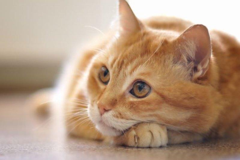 你以為貓咪做錯事會心虛嗎?
