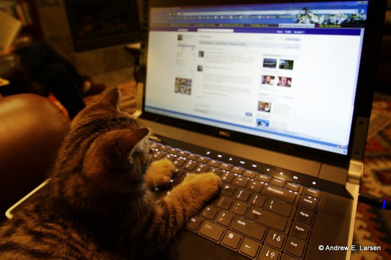 加臉書好友前,要特別小心來路不明的網友!(圖/Andrew E. Larsen@flickr)