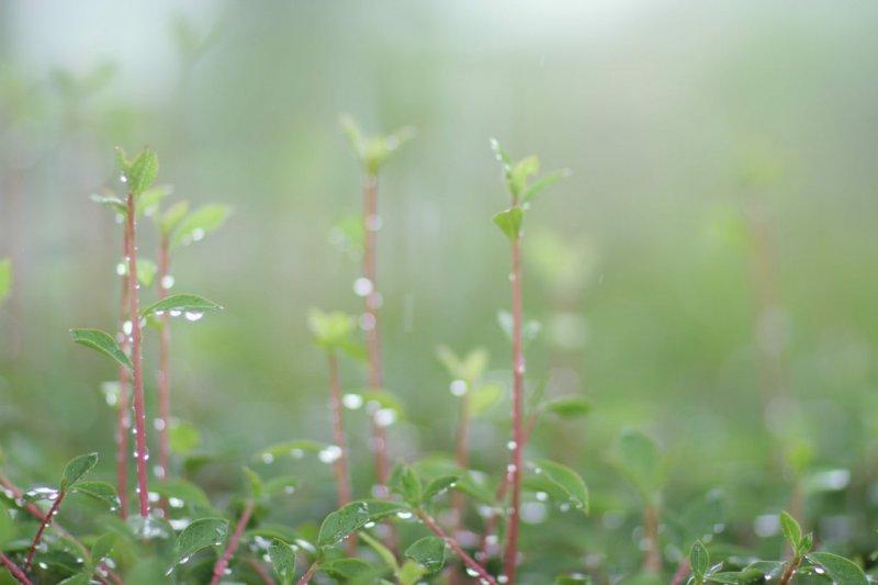 端午連假請隨時注意氣象局天氣預報!(圖/Takashi Hososhima@flickr)