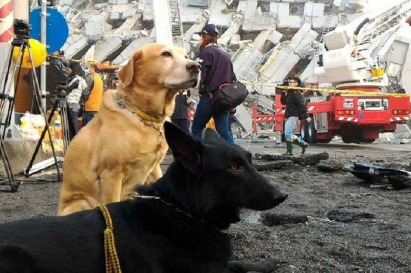 照片取自「搜救犬卡拉」臉書及IRO官方網站。作者提供。