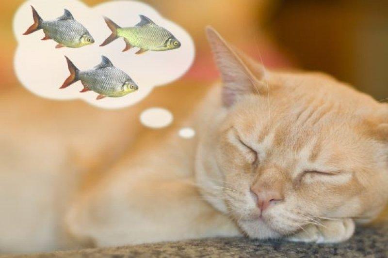 飼主注意,貓咪吃魚和海鮮有禁忌!