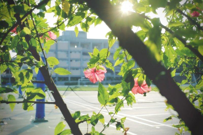 炎夏應多補充水分,減少大太陽下活動時間(圖/Nisa yeh@flickr)
