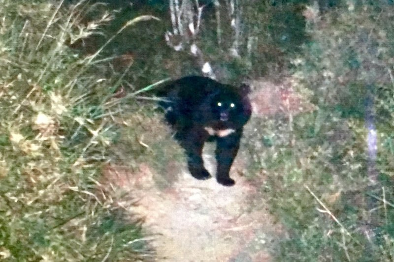 山友在嘉明湖遇見台灣黑熊。(取自天馬登山隊臉書)