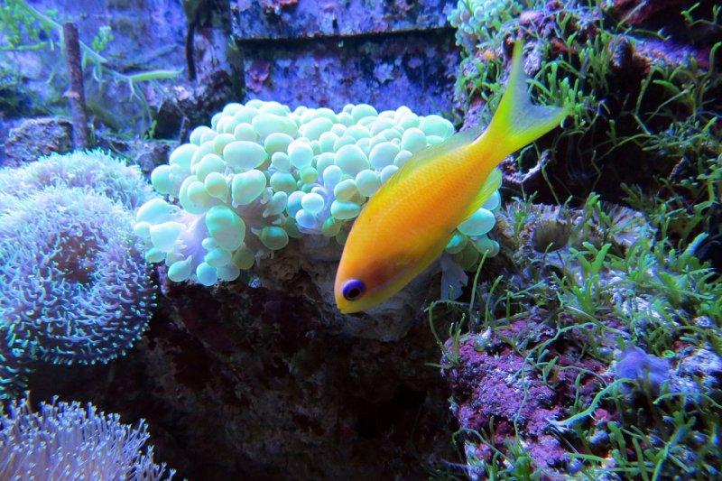 20160621-SMG0045-003-珊瑚礁。(Pixabay)