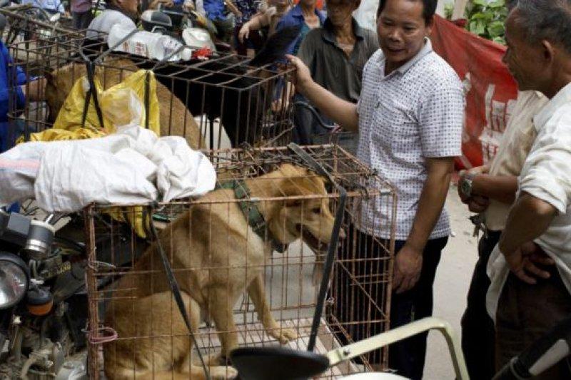 在狗肉節前夕,已有記者來到玉林,拍攝下狗被關在籠中待宰的畫面。(BBC中文網)