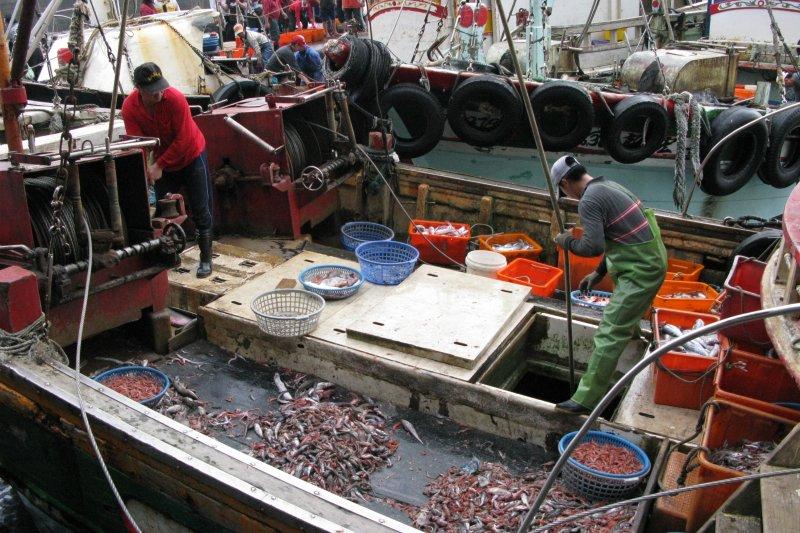 肝腎陰虛 如何 治療 , 漁港裡賣的是現流活魚,還是泡過藥的殭屍魚?資深美食記者教你3招挑海鮮