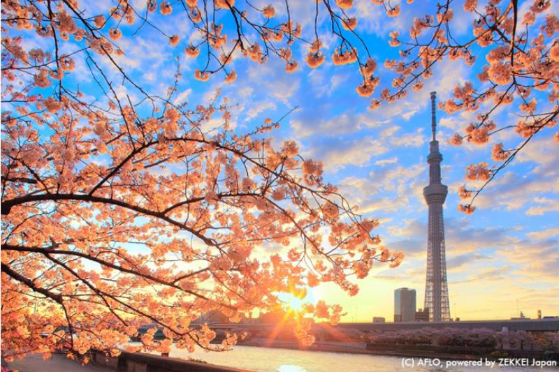 廉航超夯的7大熱門航點!(圖/ZEKKI JAPAN)