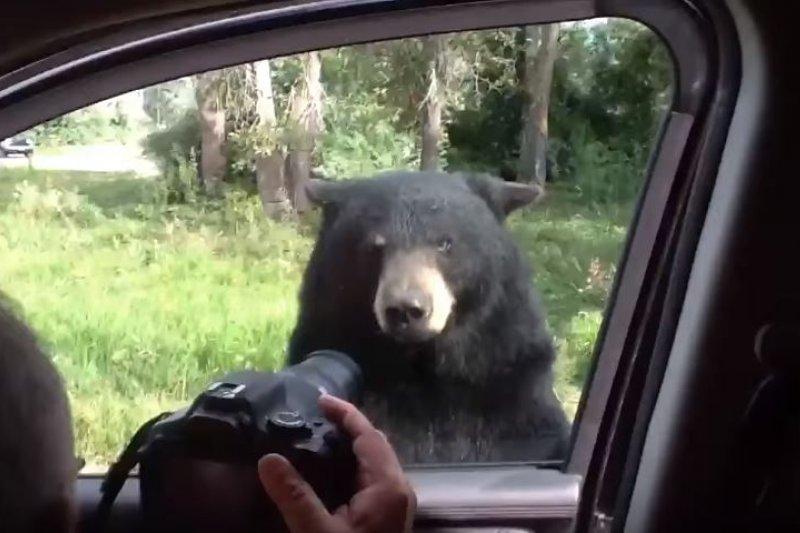就算在車上拍野生動物,也未必安全啊(圖/Nature Captures@youtube)