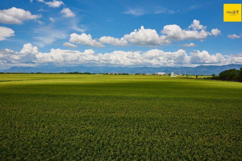 一望無際的嘉南平原,是臺灣的穀倉,但今年不休耕紀錄破功,缺水出現重大警訊。