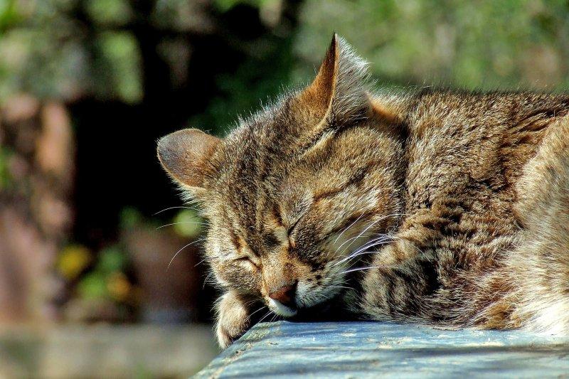 睡眠不足不但傷身,還可能讓身體變成易胖體質⋯⋯(圖/pixabay)