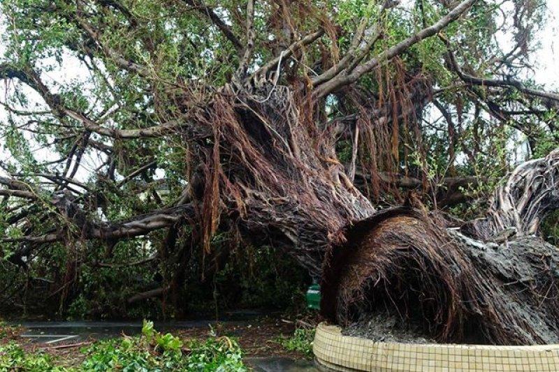 颱風尼伯特來襲,台東縣街頭一片狼籍,災情慘重。(取自林豐傑臉書)