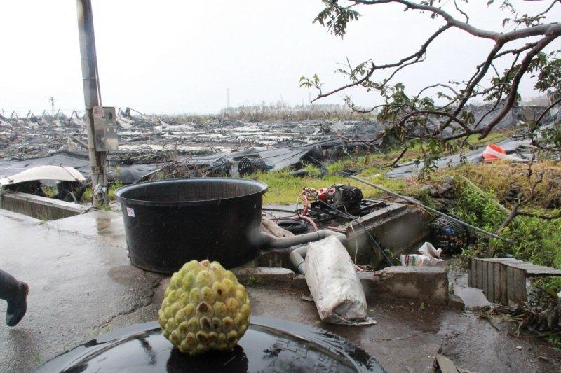 尼伯特颱風肆虐,台東農損嚴重。(台灣好新聞提供)