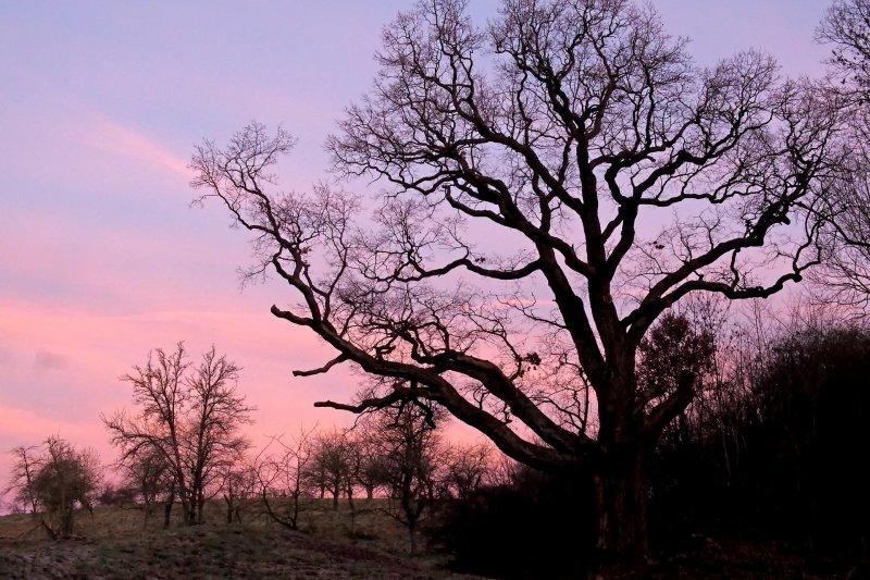從西班牙北方的珍貴橡木林開始,隨著橡木桶的足跡展開了一場浪漫的旅程。(圖/luis-e@pixabay)