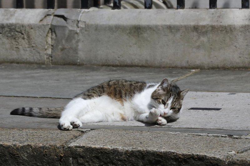 英國首相官邸「捕鼠長」、英國「第一貓」賴瑞(Larry)(美聯社)