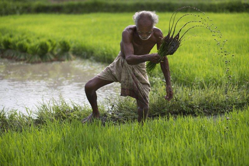 人類農業如何起源?科學家研究發現:最早的農民來自不同人種(美聯社)