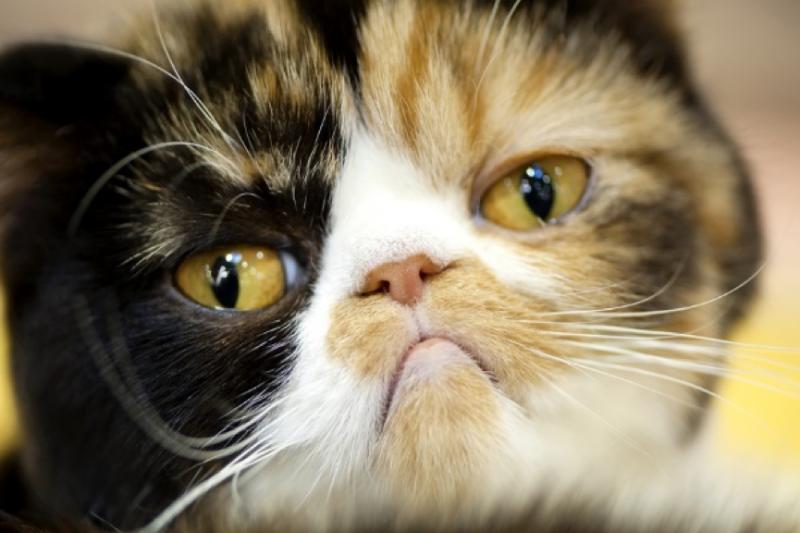 飼主不必太擔心,貓咪皮膚出現異狀,只要及早就醫接受治療大多都會得到好效果喔!(圖/寵毛網提供)