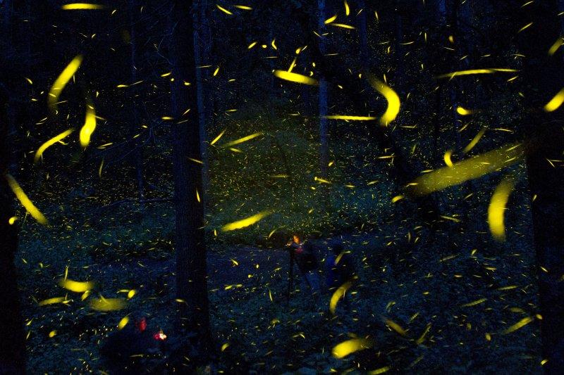 墨西哥的皮耶卓特坎特艾妲(Piedra Canteada)公園內成千隻螢火蟲,綠光點點。(美聯社)