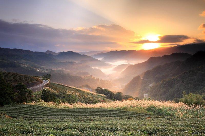 坪林當地人口逐漸高齡化影響,也讓製茶技術在世代傳承上產生問題。(圖/坪林。白青長茶作坊@facebook)