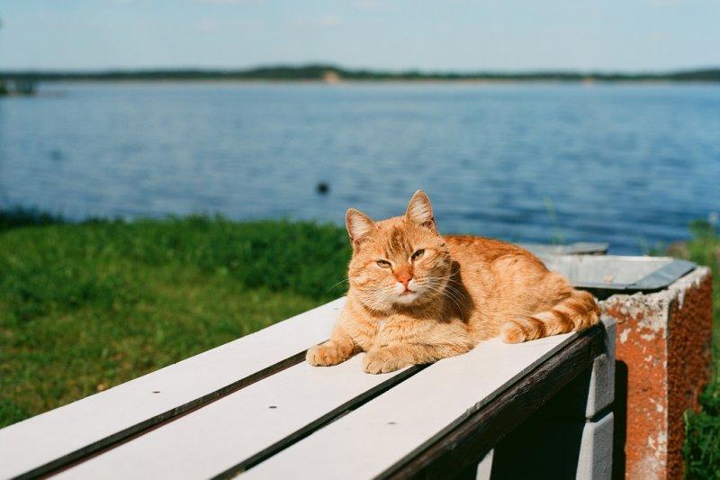 廣大的貓奴和兔奴們,快趁著暑假去感受被可愛的貓咪和兔子包圍的幸福吧!(圖/Reinis Traidas@Flickr)