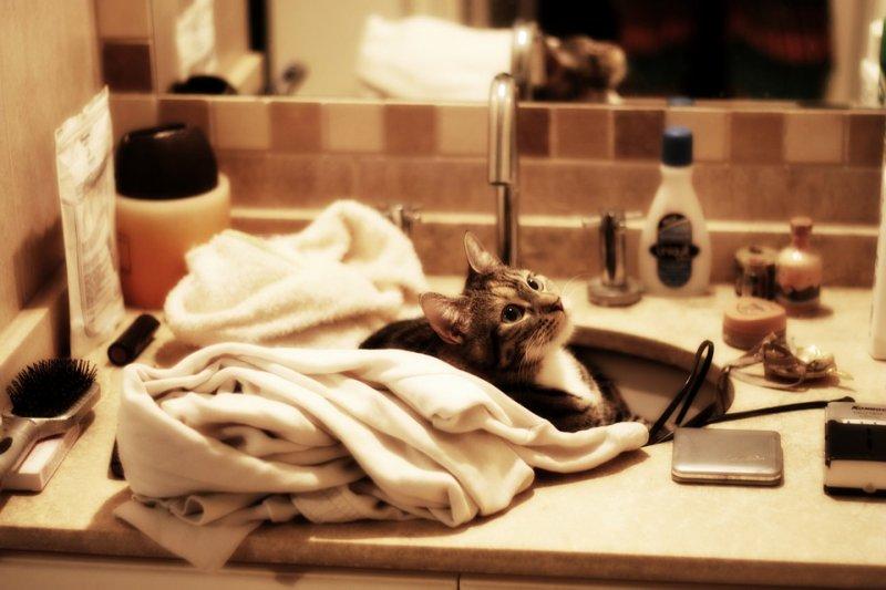 拚了命的保養肌膚卻總不見效?問題可能出在你家廁所……(圖/Alexis@Pixabay)
