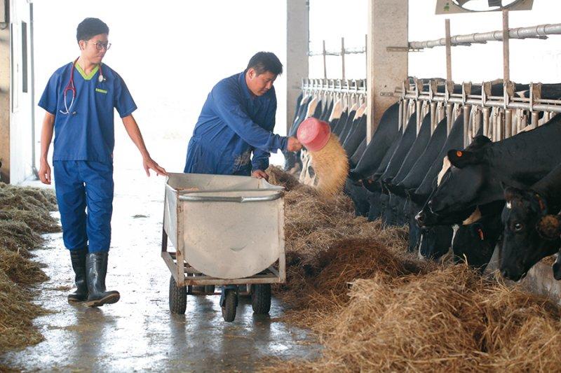 大動物獸醫龔建嘉用自己的專業,解決眾人的問題,喝一杯安心的鮮奶,再也不是難事。(圖/鮮乳坊提供)