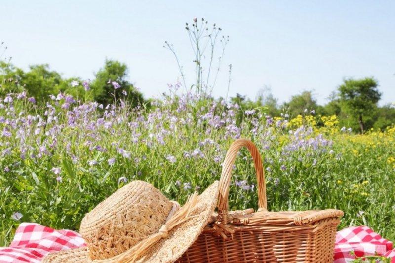 熱愛野餐的日本人都有哪些愛去的熱門景點跟私房菜呢?(圖/MATCHA)