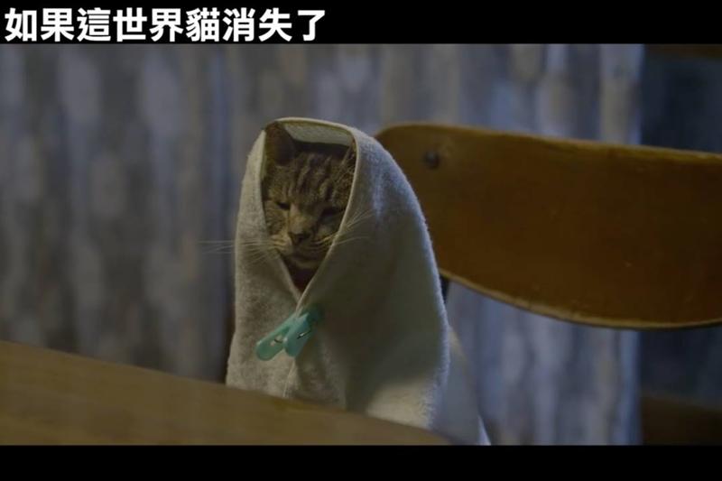 雖然片中有可愛的貓,但貓並不是主角。(圖/截自Youtube)