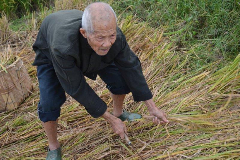 中國老農民一年的收支,究竟是多少?(取自網路)
