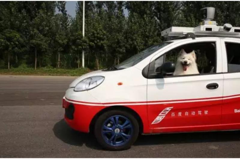 百度無人車出現在考照場駕駛是2隻狗(取自中國新浪科技網)